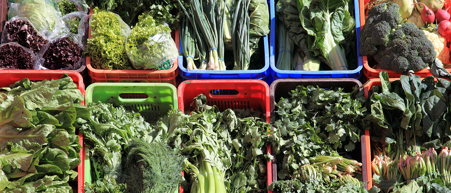 trays of green leafy vegetables