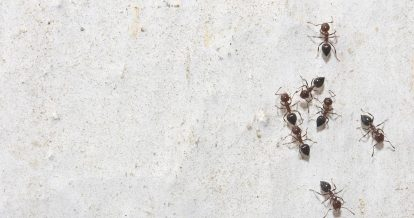 A Singaporean consumers' guide to insect repellents