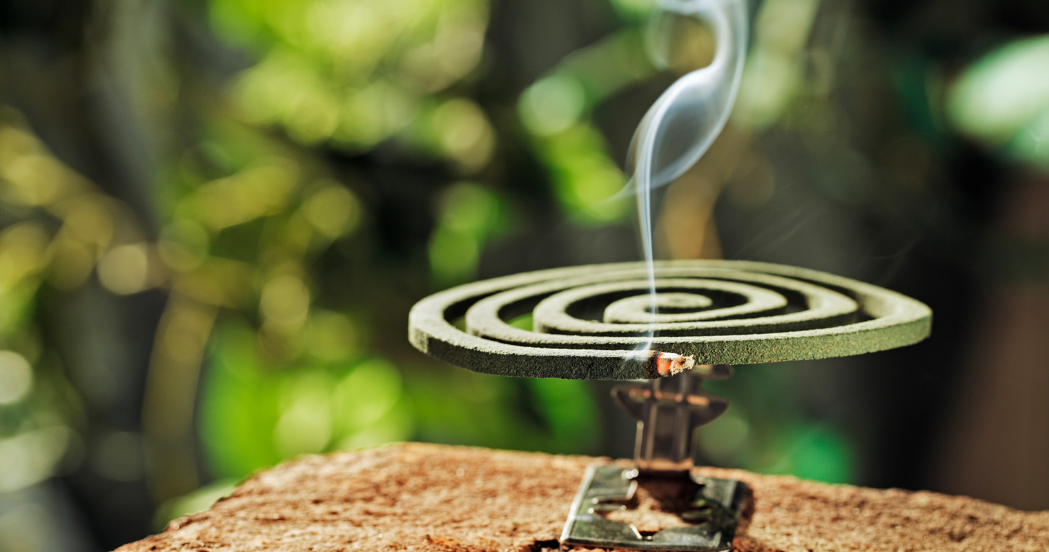 Mosquito coil as insect repellent