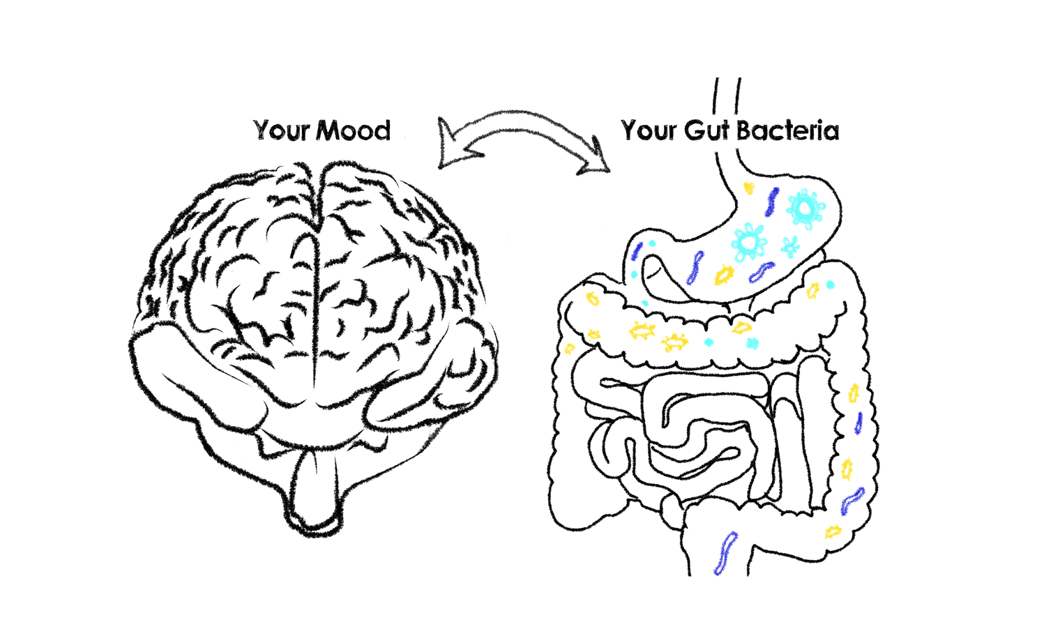Your mood and gut bacteria.