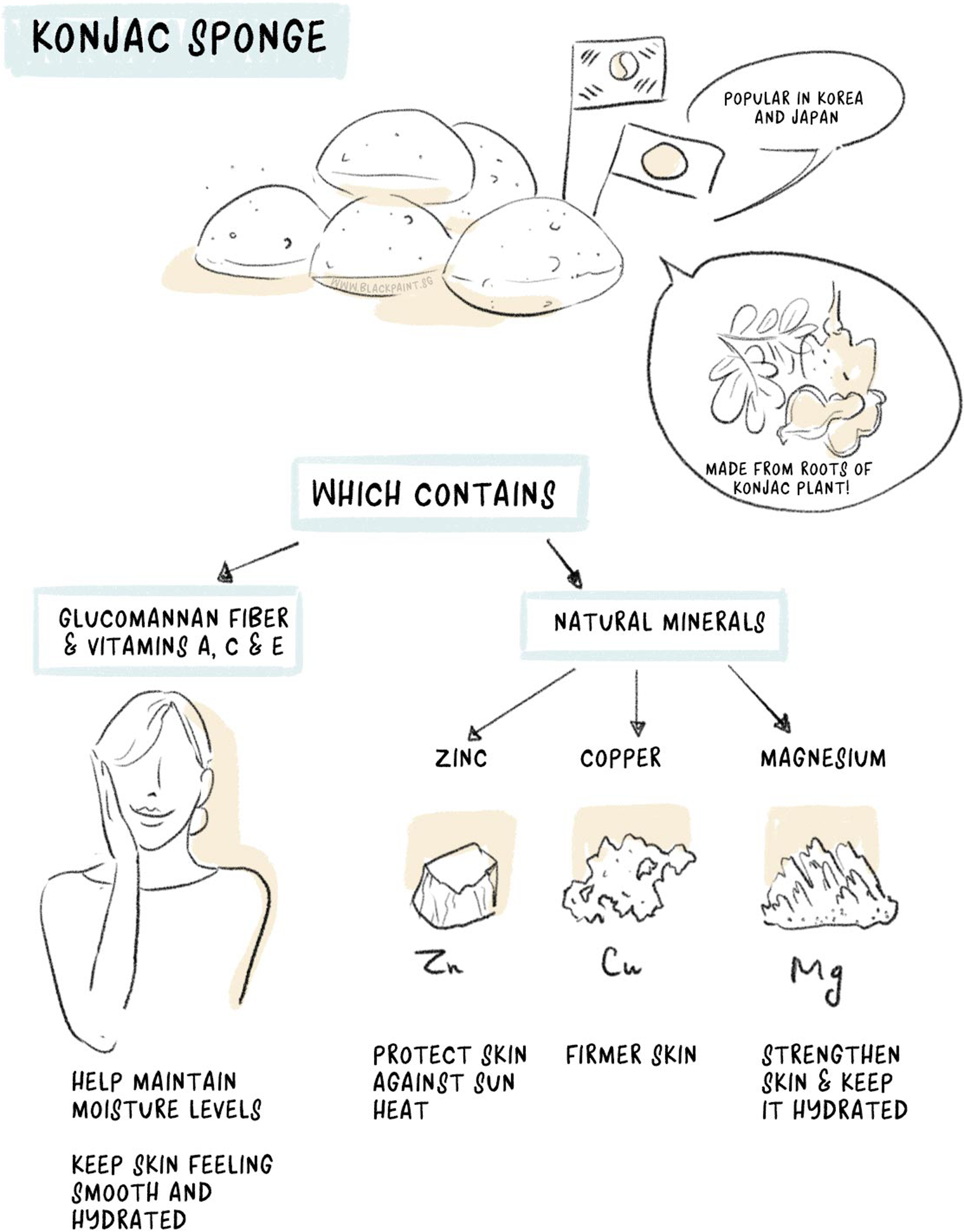 illustration of konjac sponge being derived from a plant, and containing many nutrients