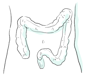 illustration of Almond oil helping in maintaining colon and rectum health