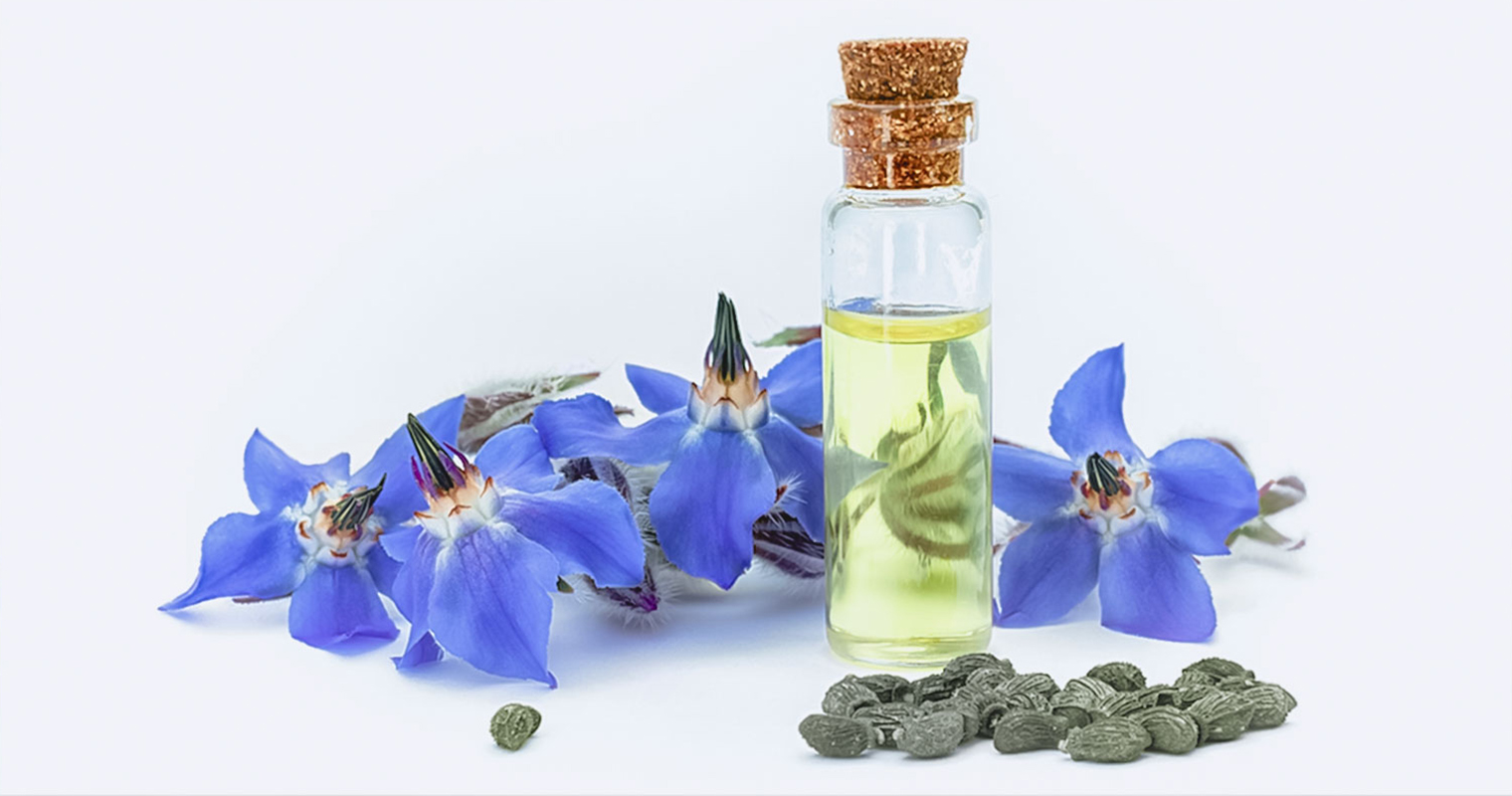 A bottle of Borage oil in front of Borage flower and Borage seeds