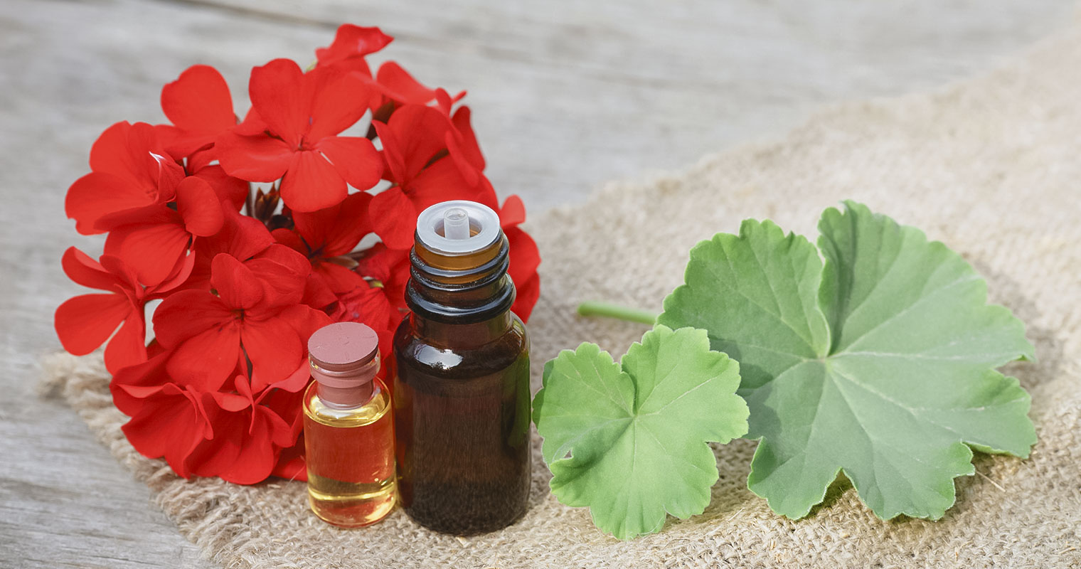 Geranium flower and leaf with a bottle containing Geranium oil