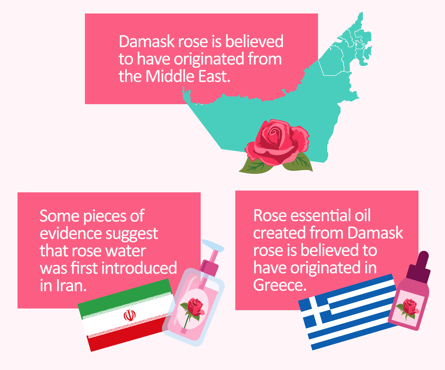 illustration of history of damask rose