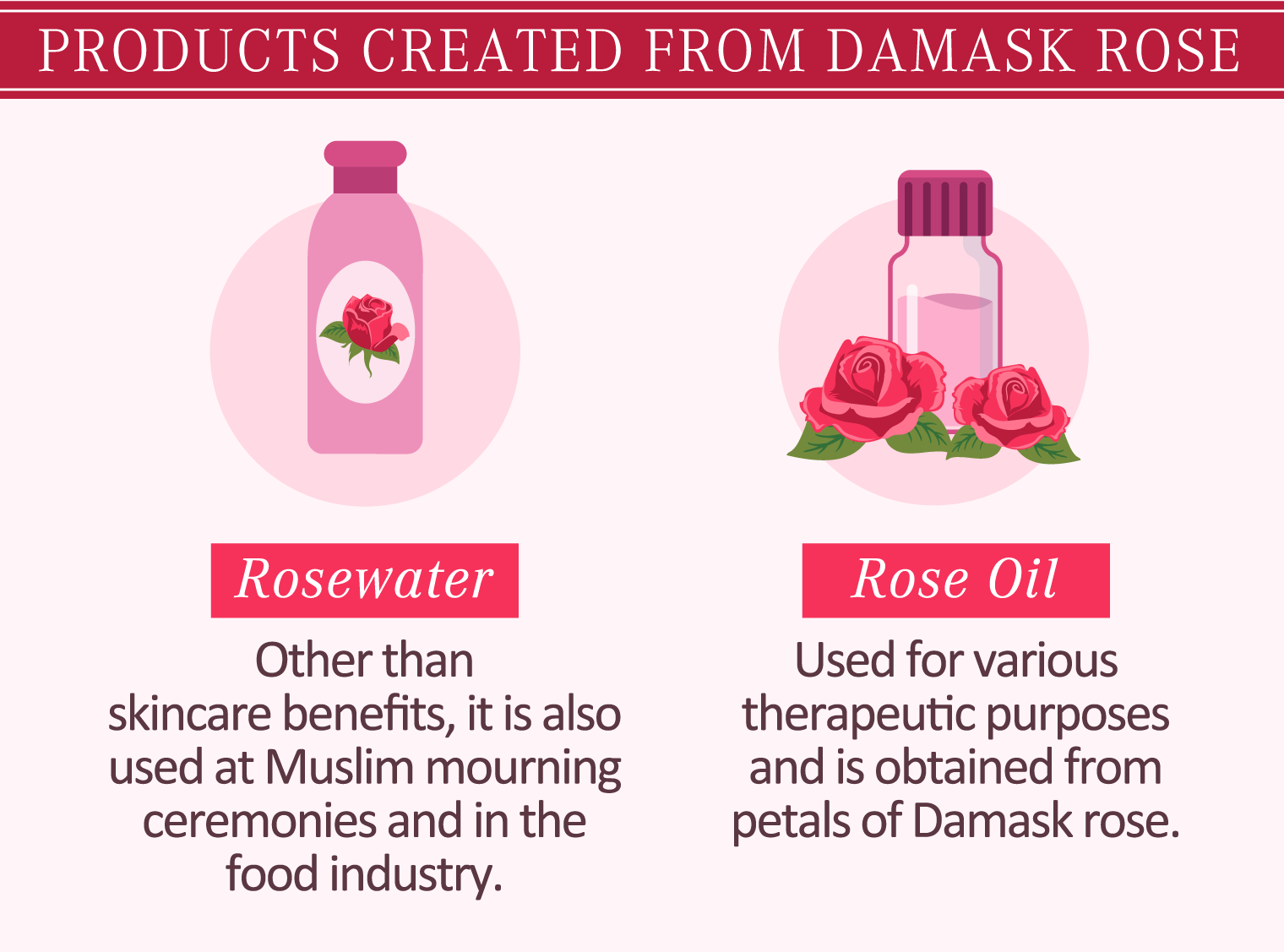 illustration of products created from damask rose